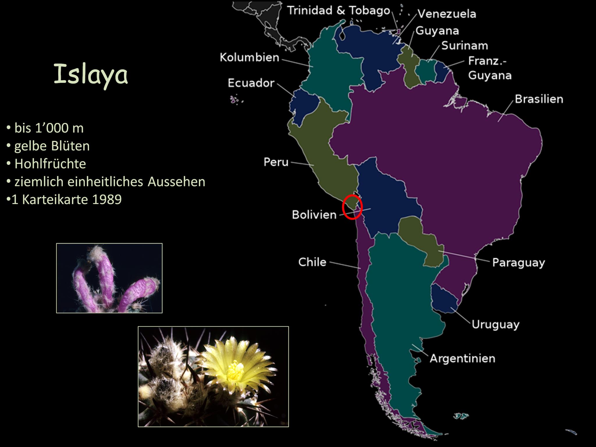 Islaya